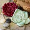 Succulent Mould